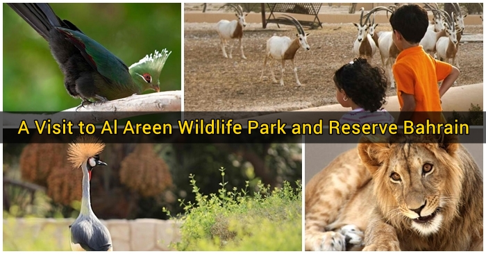 A Visit to Al Areen Wildlife Park and Reserve Bahrain